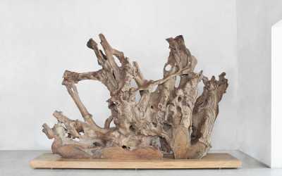 32 natural teak root sculpture